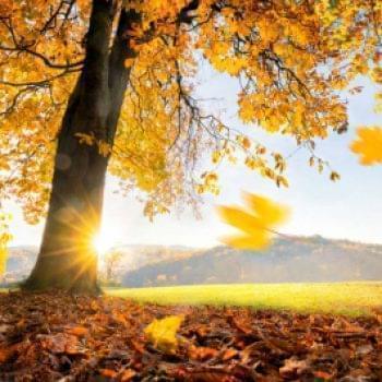 Отчеты - Ноябрь | Фонд Инна