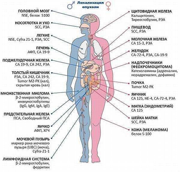 Прагнення жити - Онкомаркери. Рання діагностика раку | Фонд Інна