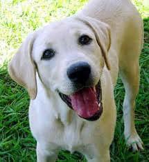 Стремление жить - Собака – не только друг человека. Но и его лекарь! | Фонд Инна