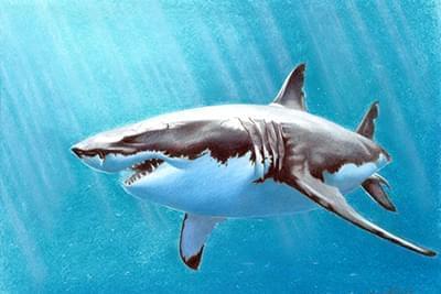 Новини - Увага – акула на фестивалі! Аукціон! | Фонд Інна