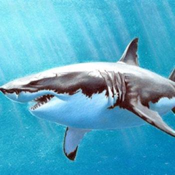 Новости - Внимание — акула на фестивале! Аукцион! | Фонд Инна