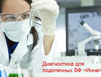 Новости - ФОНД «ИННА» ОБСЛЕДОВАЛ СВОИХ ПОДОПЕЧНЫХ | Фонд Инна