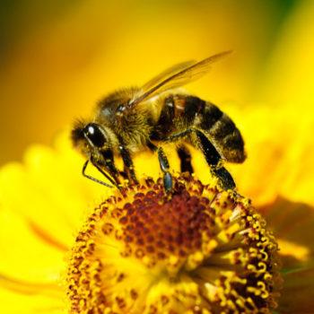 Стремление жить - Яд пчелы убивает клетки рака | Фонд Инна - Благотворительный фонд помощи онкобольным